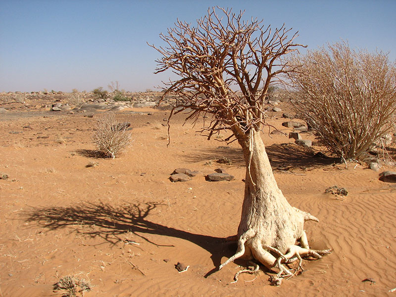 african desert animals and plants